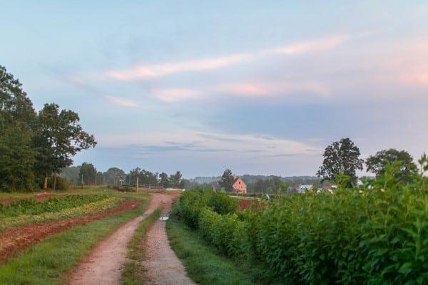 Serenbe Farms
